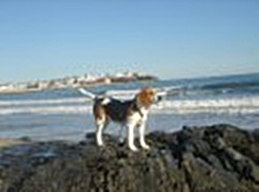 webassets/Copperonrocks.jpg